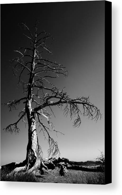 Survival Tree Canvas Print featuring the photograph Survival Tree by Chad Dutson