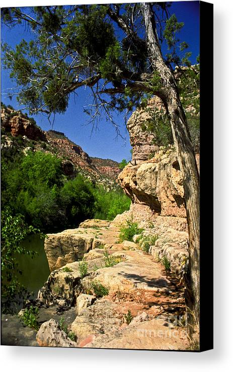 Arizona Canvas Print featuring the photograph Sycamore Canyon by Kathy McClure