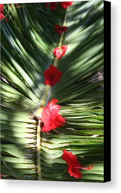 Tabyana Canvas Print featuring the photograph Tabyana Beach Honduras by Steven Saylor