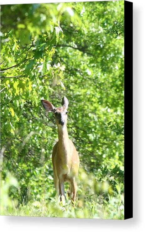 Deer Canvas Print featuring the photograph Taken Aback by Neal Eslinger