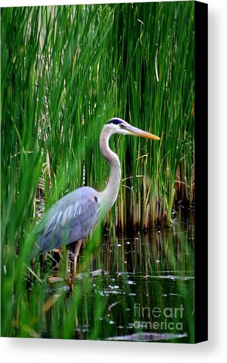 Crane Cranes Wild Bird Birds Rlclough Canvas Print featuring the photograph The Crane 2010. No.3 by RL Clough