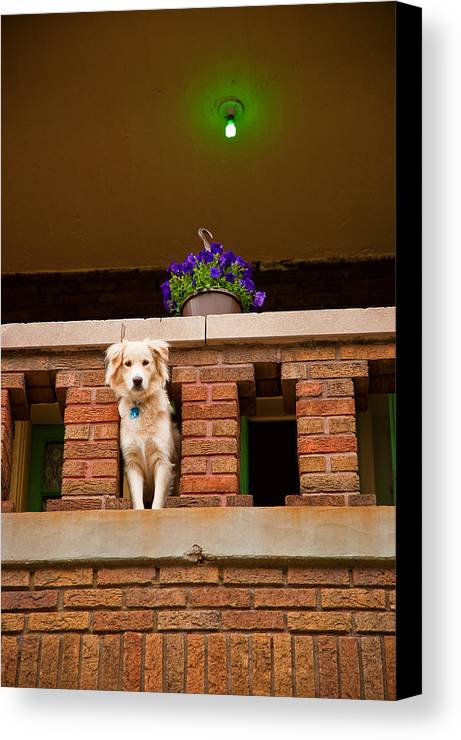 Dog Canvas Print featuring the photograph The Critic by Kristi Swift