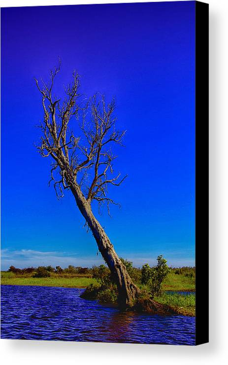 Death Canvas Print featuring the photograph The Death Of A Tree V5 by Douglas Barnard