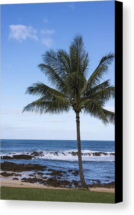 Perfect Palm Tree Sharks Cove At Sunset Beach Oahu Hawaii Hi Seascape Canvas Print featuring the photograph The Perfect Palm Tree - Sunset Beach Oahu Hawaii by Brian Harig