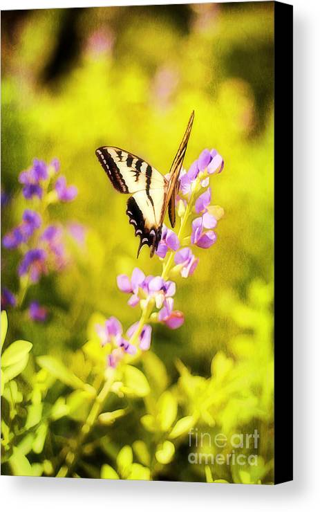 Painterly Canvas Print featuring the photograph Those Summer Dreams by Darren Fisher