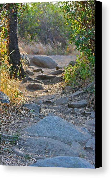 Nature Canvas Print featuring the photograph Trail by Shawn Dennstedt