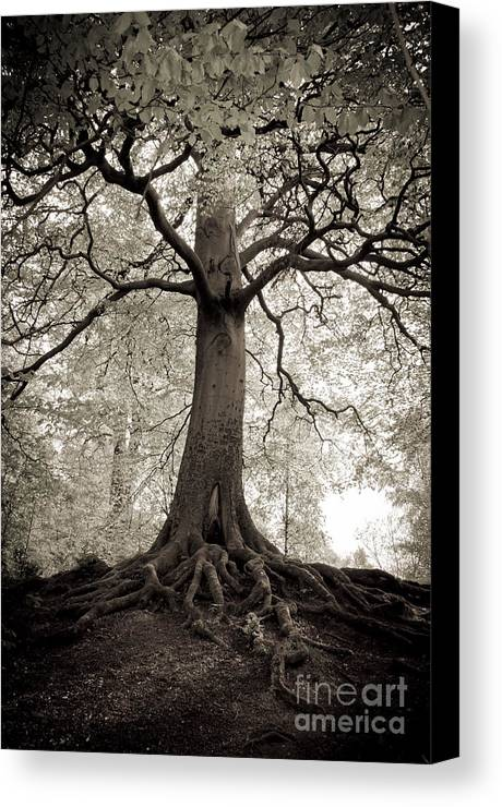 Tree Canvas Print featuring the photograph Tree Of Life by Dominique De Leeuw