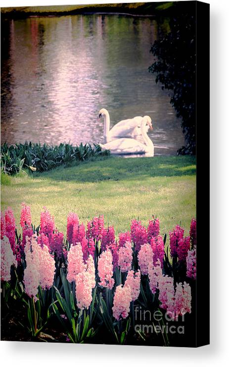 Swans Canvas Print featuring the photograph Two Swans by Jasna Buncic