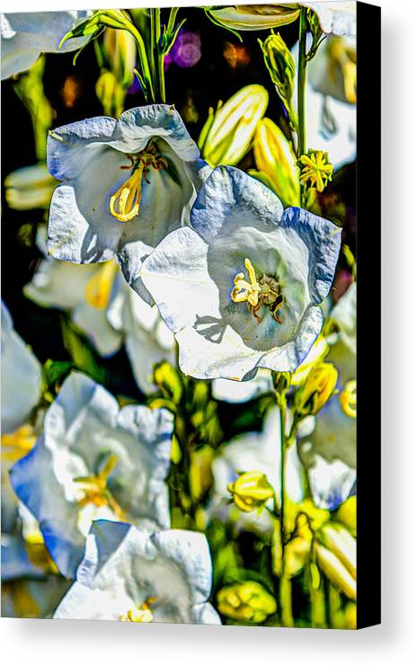Flower Canvas Print featuring the photograph White Flower Spendor by Chris McKenna
