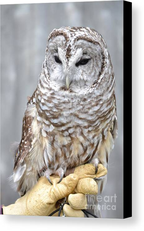 Vermont Canvas Print featuring the photograph Whooooooo by Susan Russo
