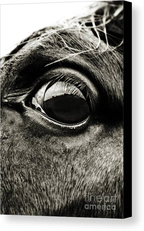Equine Canvas Print featuring the photograph Wild Horizon by Simone Byrne Photography