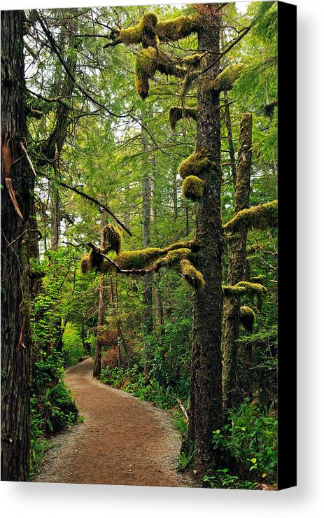 Ucluelet Canvas Print featuring the photograph Wild Pacific Trail by Ron Ritchey