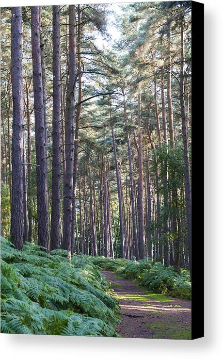 Aspley Canvas Print featuring the photograph Woodland Path by David Isaacson