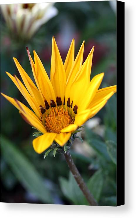 Flower Canvas Print featuring the photograph Yellow Flower by Shishir Bansal