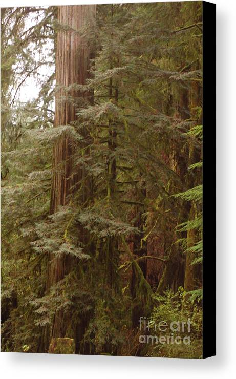 Trees Canvas Print featuring the photograph Ashland Oregon by Rose Jones