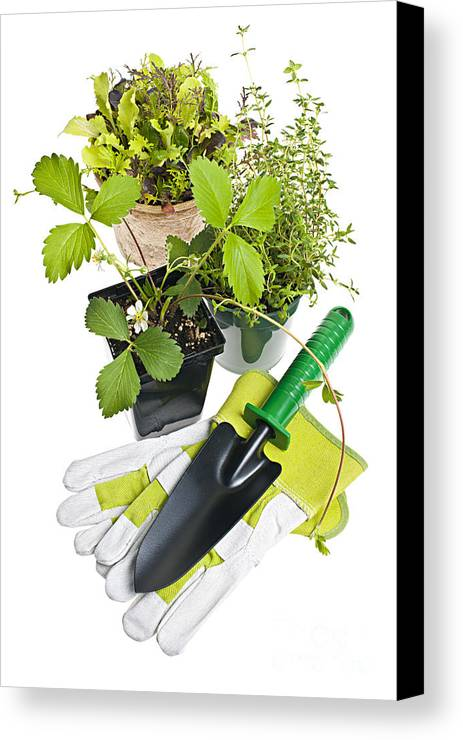 Gardening Canvas Print featuring the photograph Gardening Tools And Plants by Elena Elisseeva
