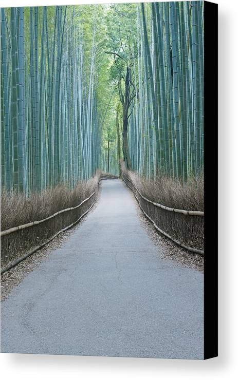 Photography Canvas Print featuring the photograph Japan Kyoto Arashiyama Sagano Bamboo by Rob Tilley