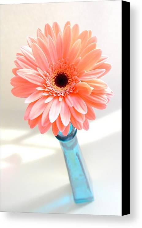 Gerbera Photographs Canvas Print featuring the photograph 1636-002 by Kimberlie Gerner