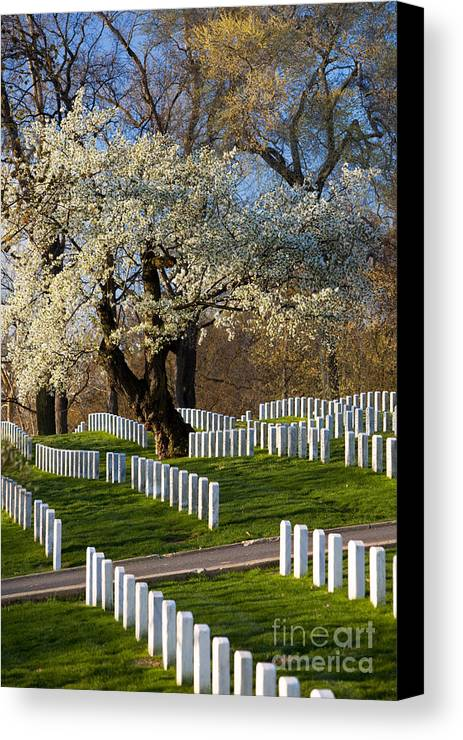 Blossoms Canvas Print featuring the photograph Arlington National Cemetary by Brian Jannsen