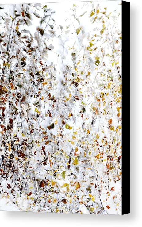 Tree Canvas Print featuring the photograph Birch Twigs In Autumn - Multiple Layers by Ulrich Kunst And Bettina Scheidulin
