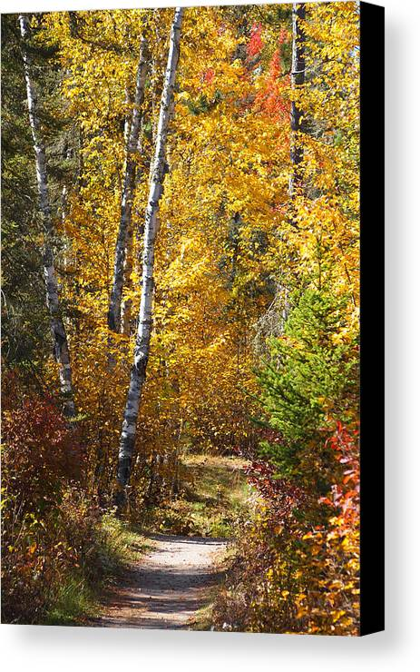 Fall Canvas Print featuring the photograph A Way In by George Ramondo