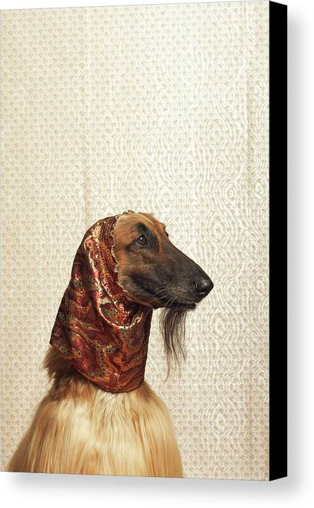 Vertical Canvas Print featuring the photograph Afghan Hound Wearing Scarf by Dtp