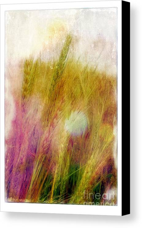 Field Canvas Print featuring the photograph Another Field Of Dreams by Judi Bagwell