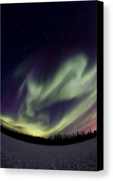 Aurora Borealis Canvas Print featuring the photograph Aurora Goose by Maik Tondeur