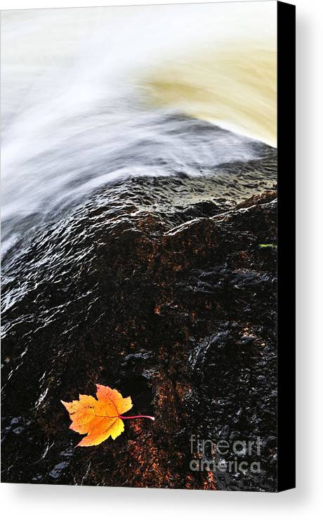 River Canvas Print featuring the photograph Autumn Leaf On River Rock by Elena Elisseeva
