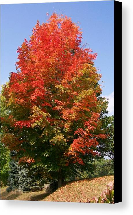 Photo Canvas Print featuring the photograph Autumn Leaves by Barbara S Nickerson