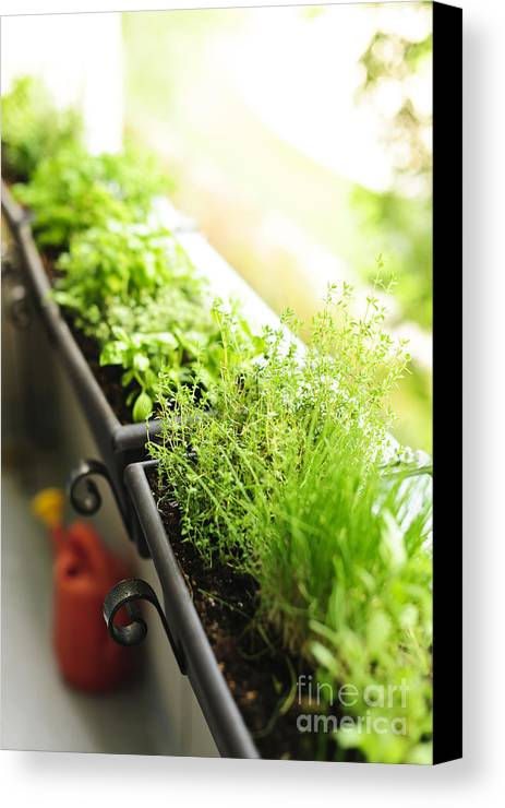 Herbs Canvas Print featuring the photograph Balcony Herb Garden by Elena Elisseeva