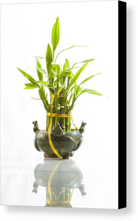 Conceptual Canvas Print featuring the photograph Bamboo In Hi-key by Jeremy Bartlett
