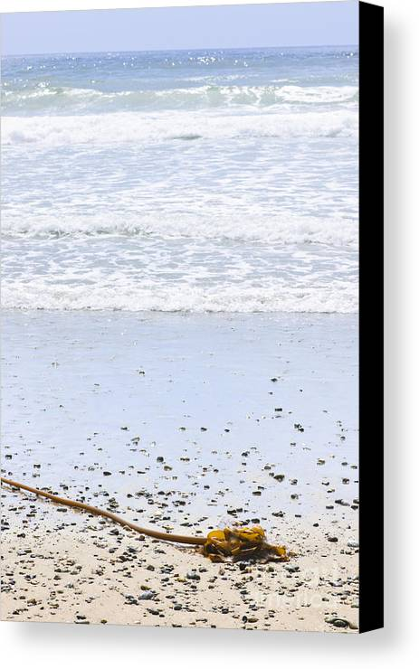 Pacific Canvas Print featuring the photograph Beach Detail On Pacific Ocean Coast by Elena Elisseeva