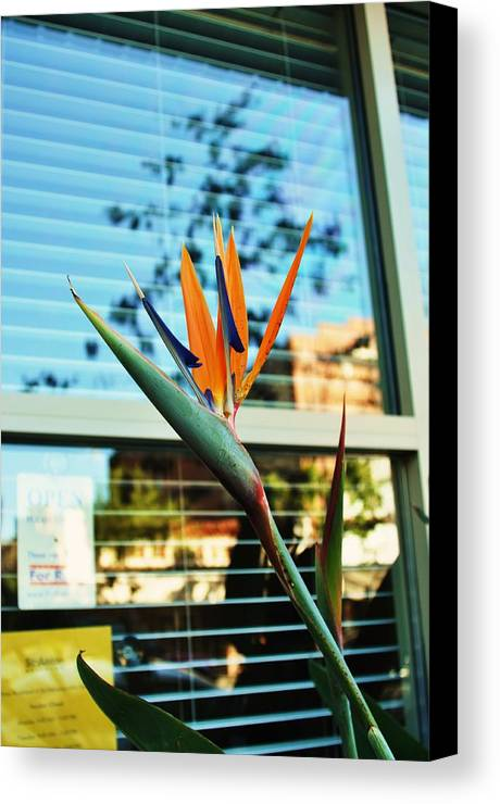 Bird Of Paradise Canvas Print featuring the photograph Bird Of Paradise-2 by Todd Sherlock