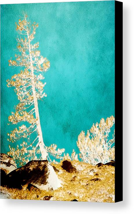 Golden Trees Canvas Print featuring the photograph Bless This Day by Bonnie Bruno