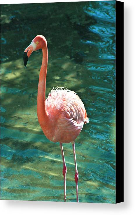 Flamingo Canvas Print featuring the photograph Caribbean Flamingo 2 by Luciano Comba