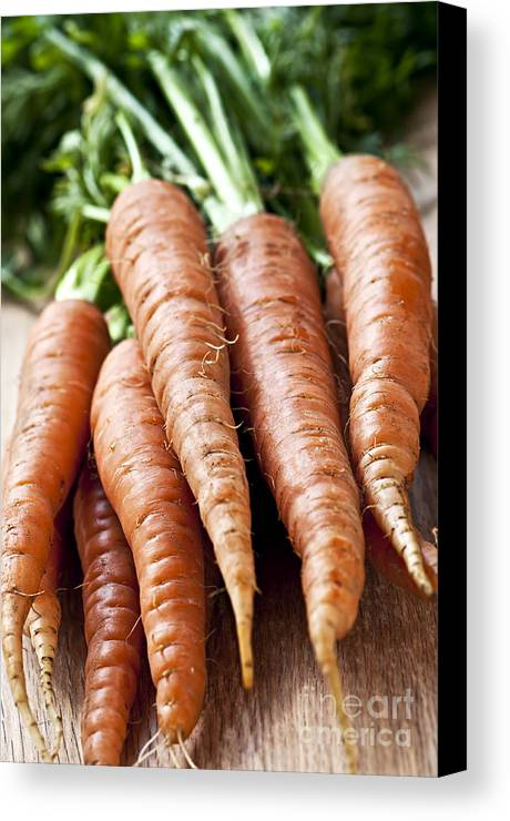 Carrots Canvas Print featuring the photograph Carrots by Elena Elisseeva