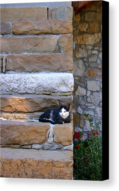 Animal Canvas Print featuring the photograph Cat On Stairs by Emanuel Tanjala