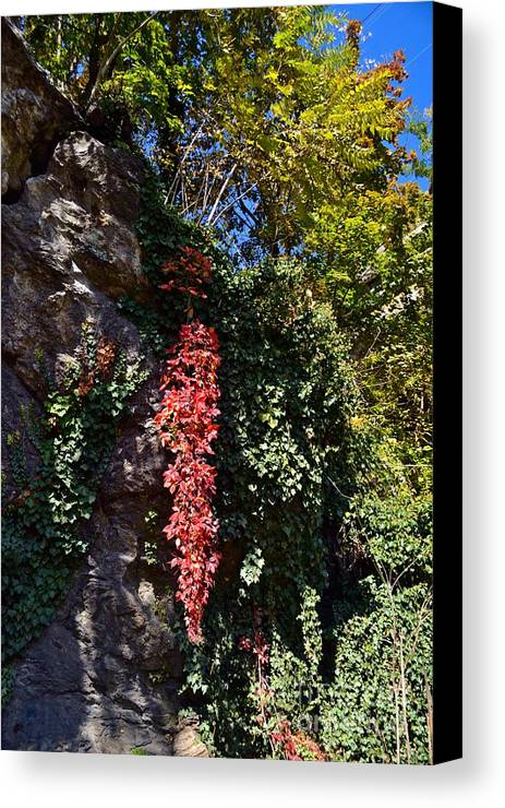 Schuylkill River Trail Canvas Print featuring the photograph colors of Autumn by Bener Kavukcuoglu