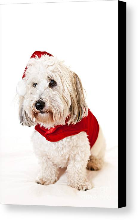 Dog Canvas Print featuring the photograph Cute Dog In Santa Outfit by Elena Elisseeva