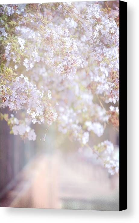 Jenny Rainbow Fine Art Photography Canvas Print featuring the photograph Dreaming Of Spring by Jenny Rainbow