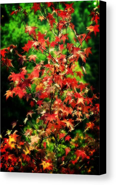 Fall Canvas Print featuring the photograph Dreamy Fall Leaves by Barbara Northrup