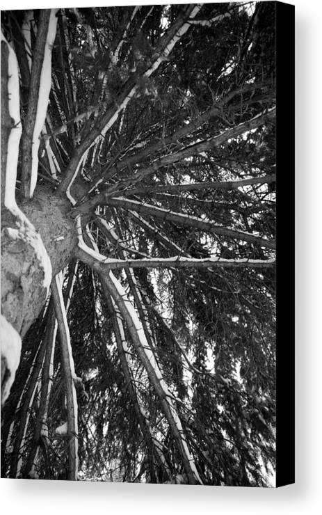 Tree Canvas Print featuring the photograph Emperyeanl Tree by Jesse Pickett