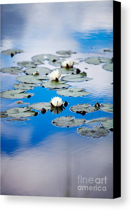 Background Canvas Print featuring the photograph European White Waterlily by Kati Finell