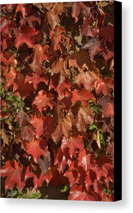 Fall Canvas Print featuring the photograph Fall Ivy On An Old Wall by Michael Flood