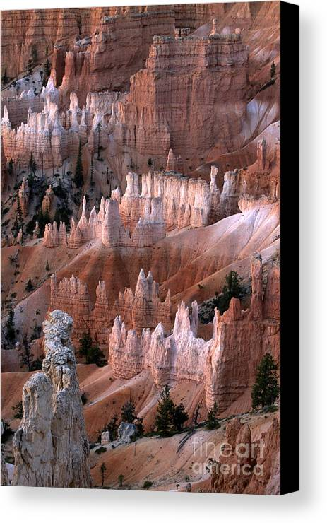 Sandra Bronstein Canvas Print featuring the photograph First Light In Bryce Canyon by Sandra Bronstein