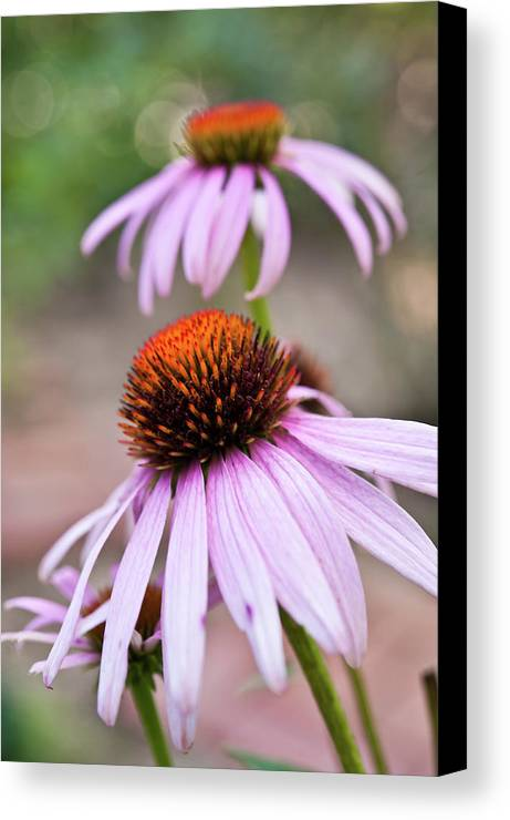 Vertical Canvas Print featuring the photograph Flowers by invisibleA