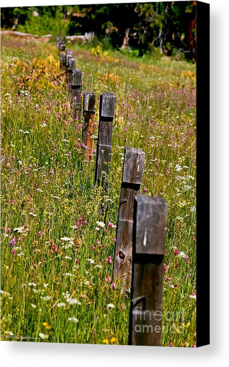 Fredricks Meadow Canvas Print featuring the photograph Fredricks Meadow by Mitch Shindelbower