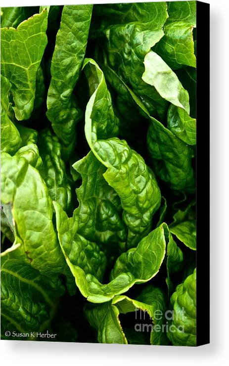 Food Canvas Print featuring the photograph Garden Fresh by Susan Herber