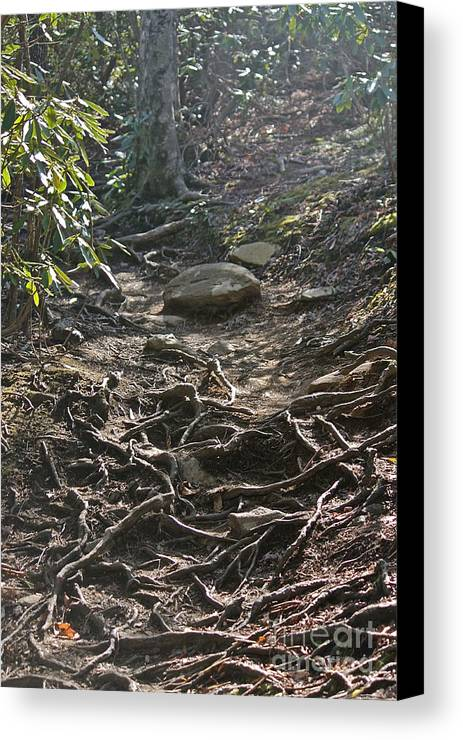 Canvas Print featuring the photograph Grandfather's Trail by Bev Veals